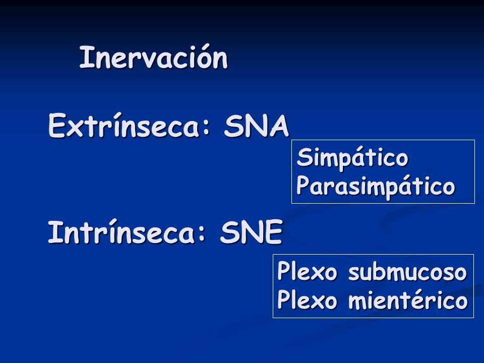 Inervación Extrínseca: SNA Intrínseca: SNE Simpático Parasimpático Plexo submucoso Plexo mientérico