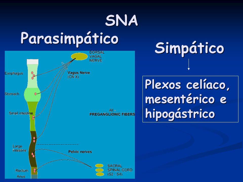 SNA Parasimpático Simpático Plexos celíaco, mesentérico e hipogástrico
