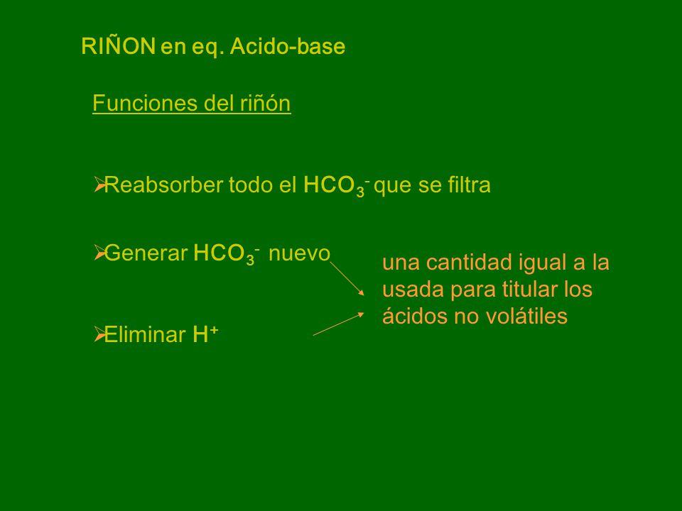 Reabsorción del HCO 3 - TCP: 80% Asa de Henle: 15% Células intercalares: 5%