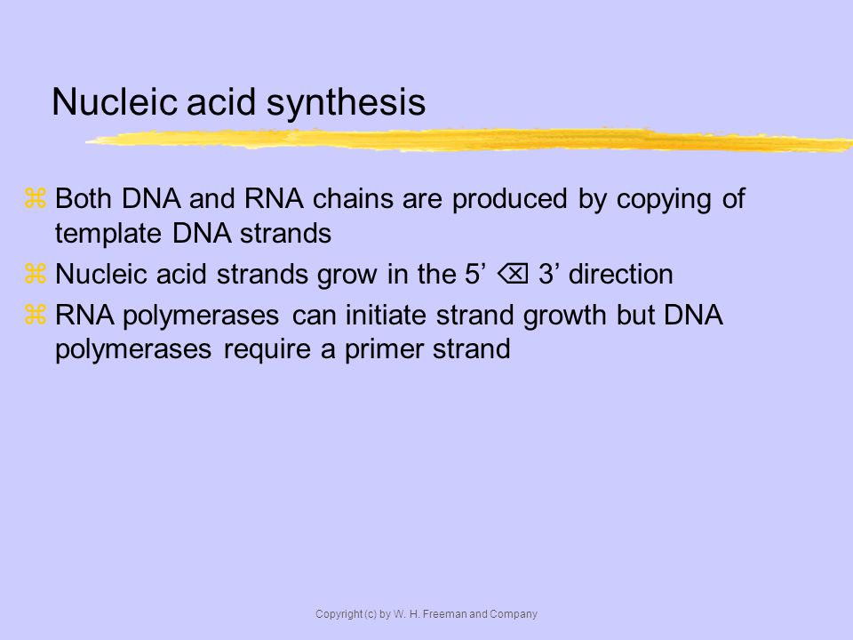 Nucleic acid synthesis Both DNA and RNA chains are produced by copying of template DNA strands Nucleic acid strands grow in the 5 3 direction RNA polymerases can initiate strand growth but DNA polymerases require a primer strand