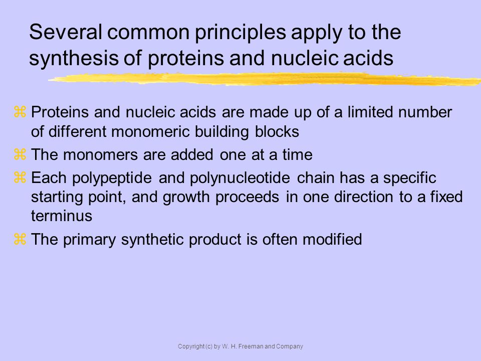 Copyright (c) by W. H. Freeman and Company Several common principles apply to the synthesis of proteins and nucleic acids Proteins and nucleic acids a