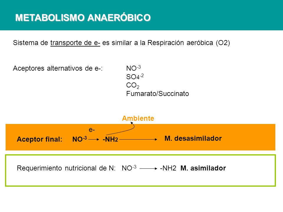 METABOLISMO ANAERÓBICO Sistema de transporte de e- es similar a la Respiración aeróbica (O2) Aceptores alternativos de e-: NO -3 SO 4 -2 CO 2 Fumarato