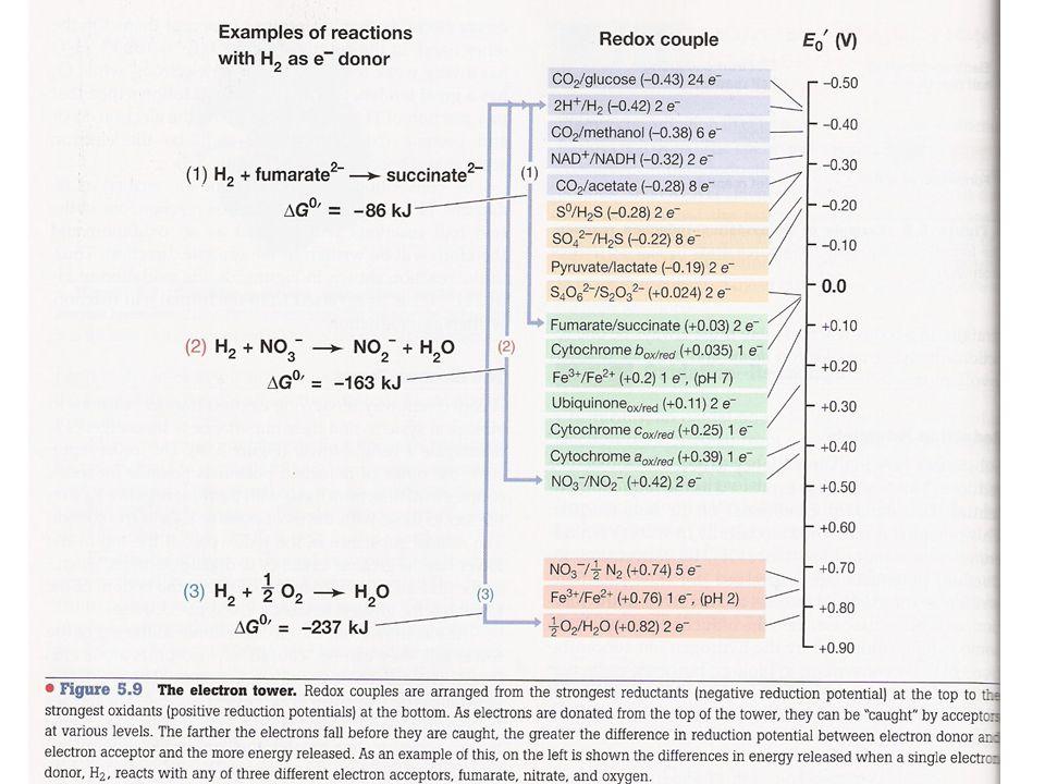 Reducción del SO 4 -2 ATP-SULFURILASA