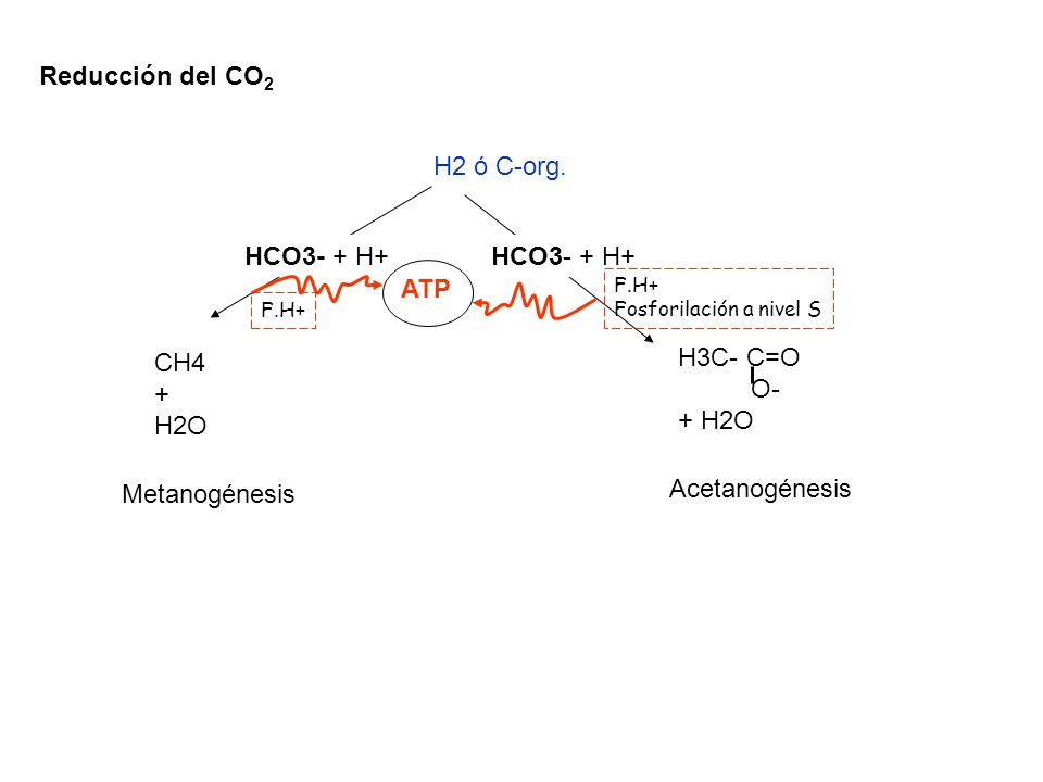 Acetanogénesis Via Acetil- CoA En microorganismos Gram (-)