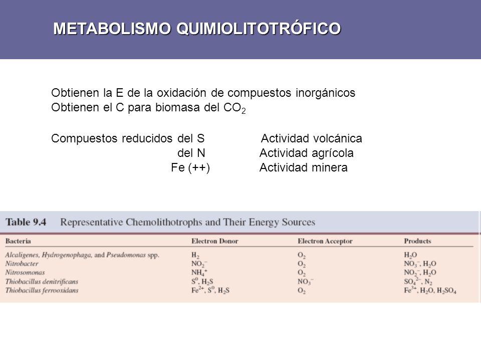 METABOLISMO QUIMIOLITOTRÓFICO Obtienen la E de la oxidación de compuestos inorgánicos Obtienen el C para biomasa del CO 2 Compuestos reducidos del S A