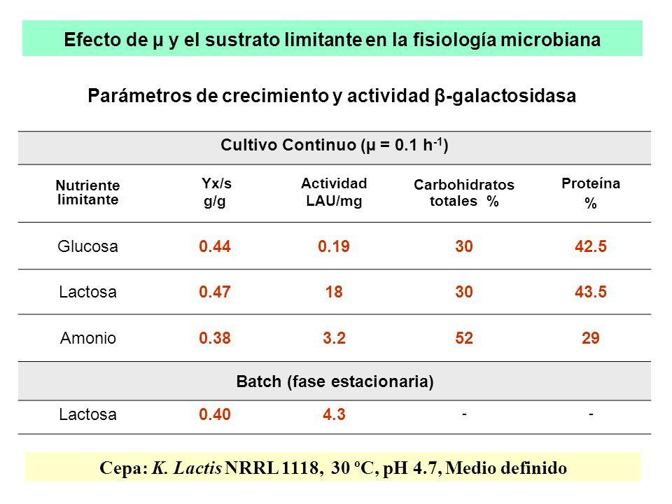 Efecto de µ y el sustrato limitante en la fisiología microbiana Parámetros de crecimiento y actividad β-galactosidasa Cultivo Continuo (µ = 0.1 h -1 ) Nutriente limitante Yx/s g/g Actividad LAU/mg Carbohidratos totales % Proteína % Glucosa0.440.193042.5 Lactosa0.47183043.5 Amonio0.383.25229 Batch (fase estacionaria) Lactosa0.404.3 -- Cepa: K.