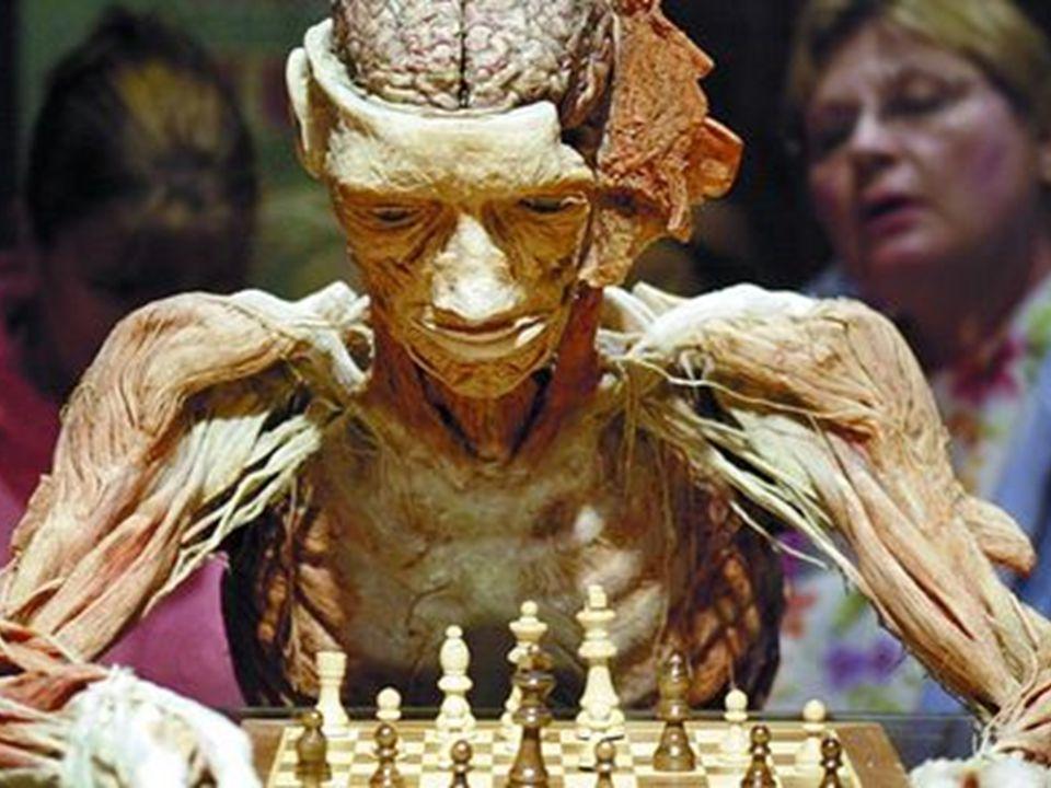 Líneas de investigación 1era: descubrir las habilidades críticas que predicen el buen rendimiento ajedrecístico.