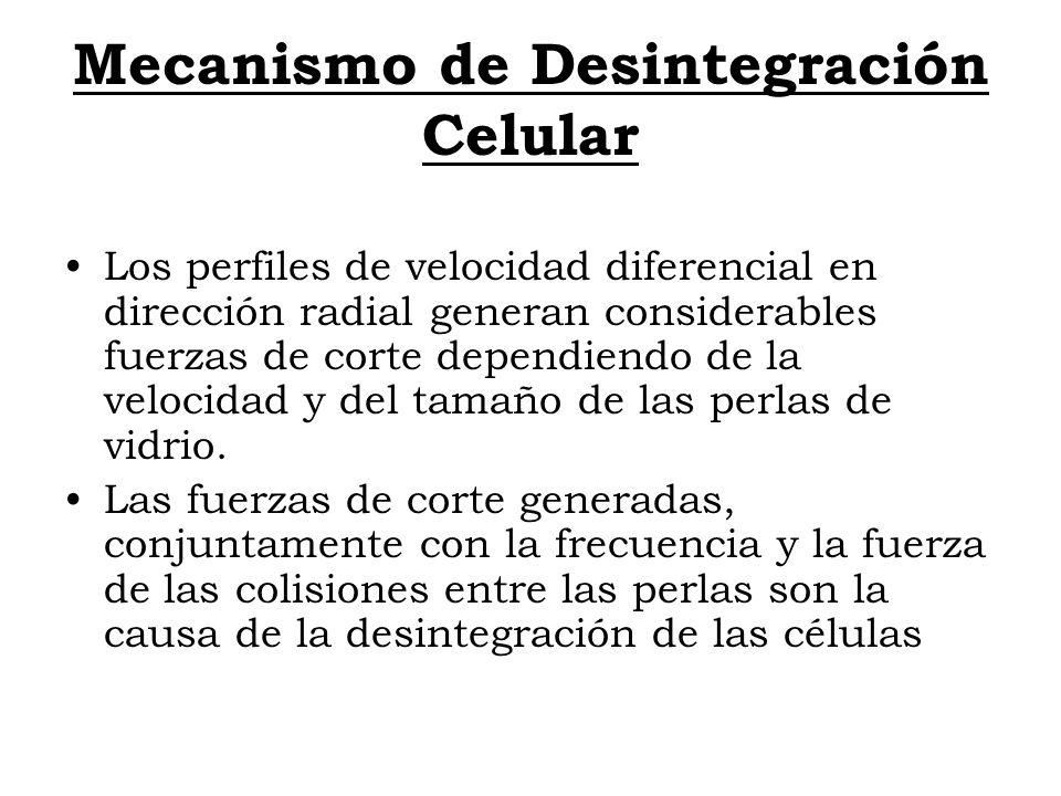 Mecanismo de Desintegración Celular Los perfiles de velocidad diferencial en dirección radial generan considerables fuerzas de corte dependiendo de la