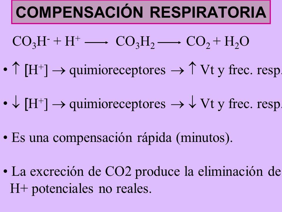 COMPENSACIÓN RESPIRATORIA CO 3 H - + H + CO 3 H 2 CO 2 + H 2 O [ H + ] quimioreceptores Vt y frec. resp. Es una compensación rápida (minutos). La excr