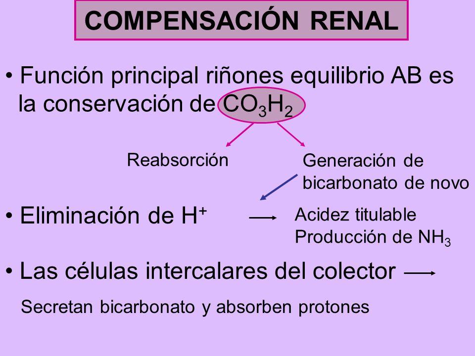 COMPENSACIÓN RENAL Función principal riñones equilibrio AB es la conservación de CO 3 H 2 Reabsorción Generación de bicarbonato de novo Eliminación de