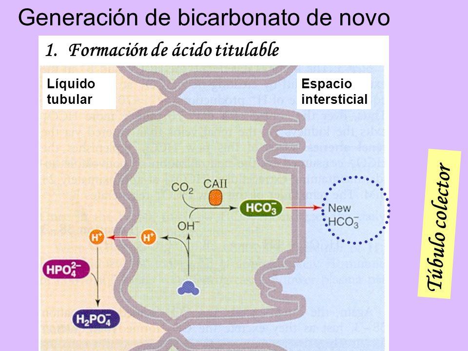 1.Formación de ácido titulable Líquido tubular Espacio intersticial Túbulo colector Generación de bicarbonato de novo