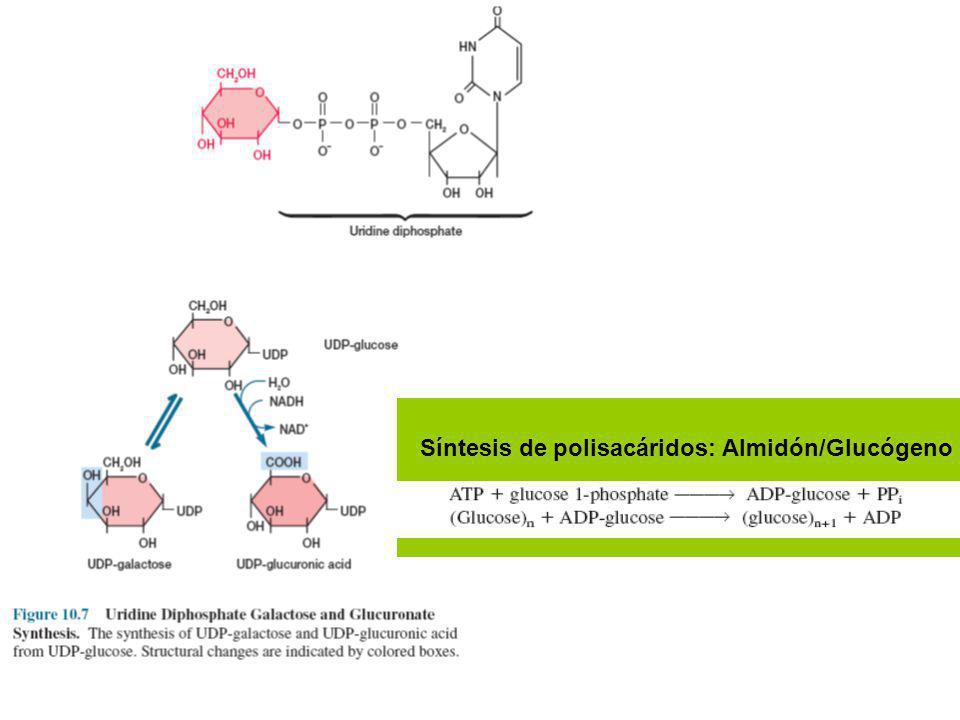 CDP: carrier cytidina di-P
