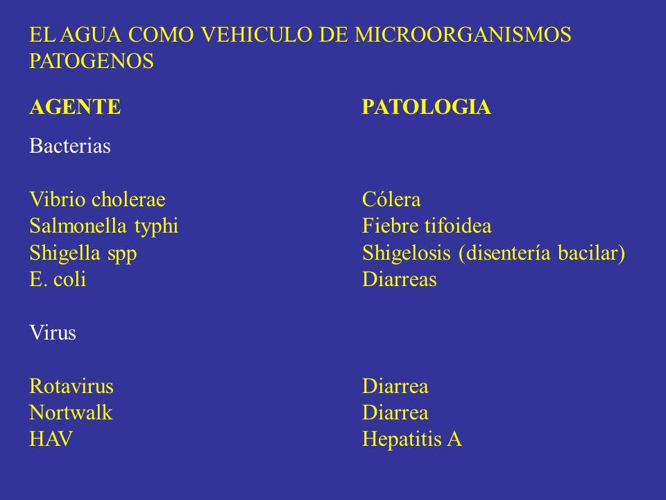 EL AGUA COMO VEHICULO DE MICROORGANISMOS PATOGENOS AGENTE PATOLOGIA Bacterias Vibrio choleraeCólera Salmonella typhiFiebre tifoidea Shigella sppShigel