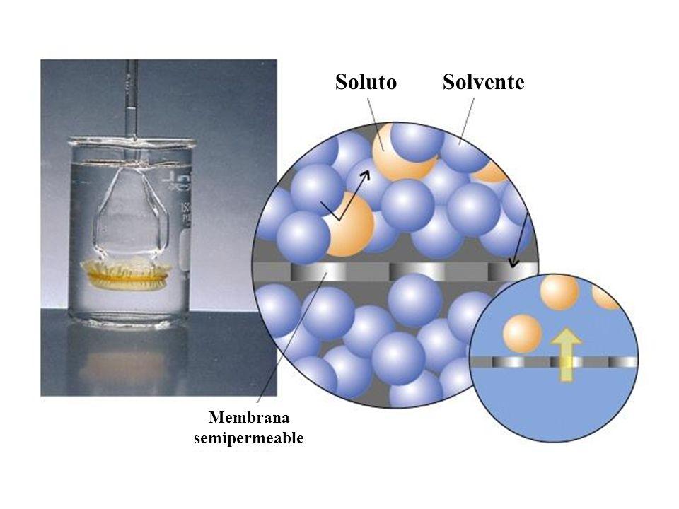 SolutoSolvente Membrana semipermeable