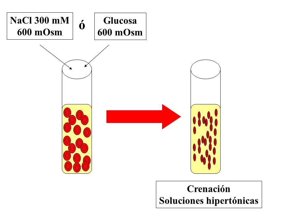 Glucosa 600 mOsm NaCl 300 mM 600 mOsm ó Crenación Soluciones hipertónicas