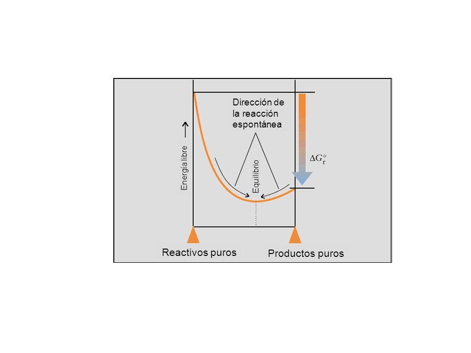 Dirección de la reacción espontánea Equilibrio Energía libre Reactivos puros Productos puros