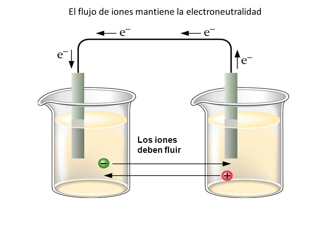 El flujo de iones mantiene la electroneutralidad Los iones deben fluir
