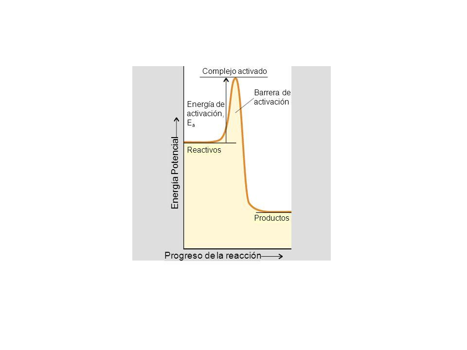 Energía Potencial Progreso de la reacción Complejo activado Barrera de activación Energía de activación, E a Reactivos Productos