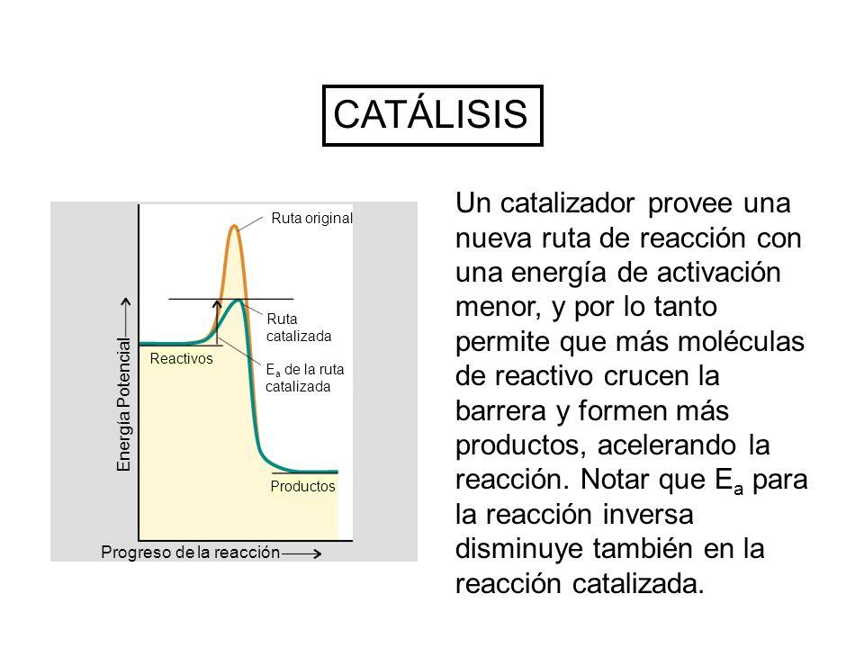 Un catalizador provee una nueva ruta de reacción con una energía de activación menor, y por lo tanto permite que más moléculas de reactivo crucen la barrera y formen más productos, acelerando la reacción.