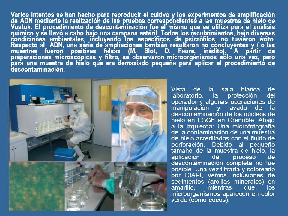 Varios intentos se han hecho para reproducir el cultivo y los experimentos de amplificación de ADN mediante la realización de las pruebas correspondientes a las muestras de hielo de Vostok.