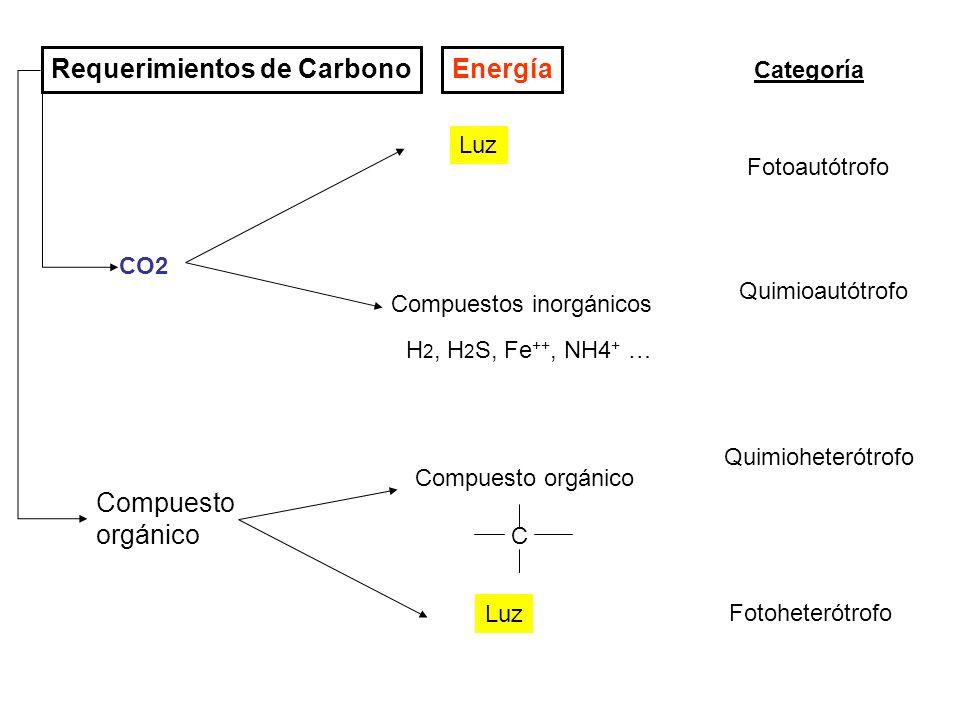 Requerimientos de Carbono CO2 Energía Compuestos inorgánicos H 2, H 2 S, Fe ++, NH4 + … Compuesto orgánico C Luz Categoría Fotoautótrofo Quimioautótro