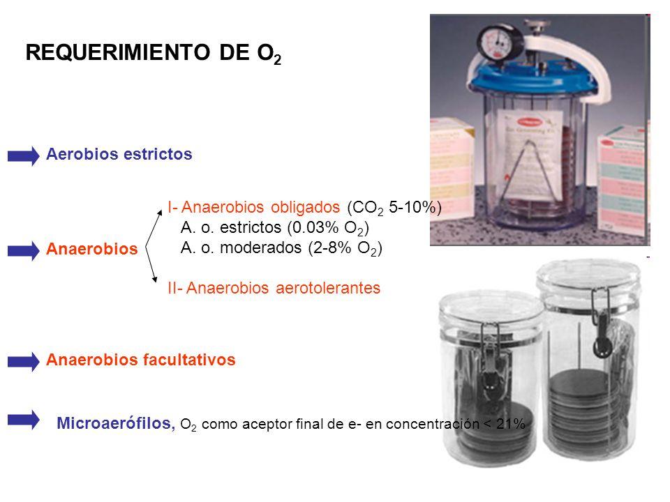 REQUERIMIENTO DE O 2 Anaerobios Anaerobios facultativos Microaerófilos, O 2 como aceptor final de e- en concentración < 21% Aerobios estrictos I- Anae