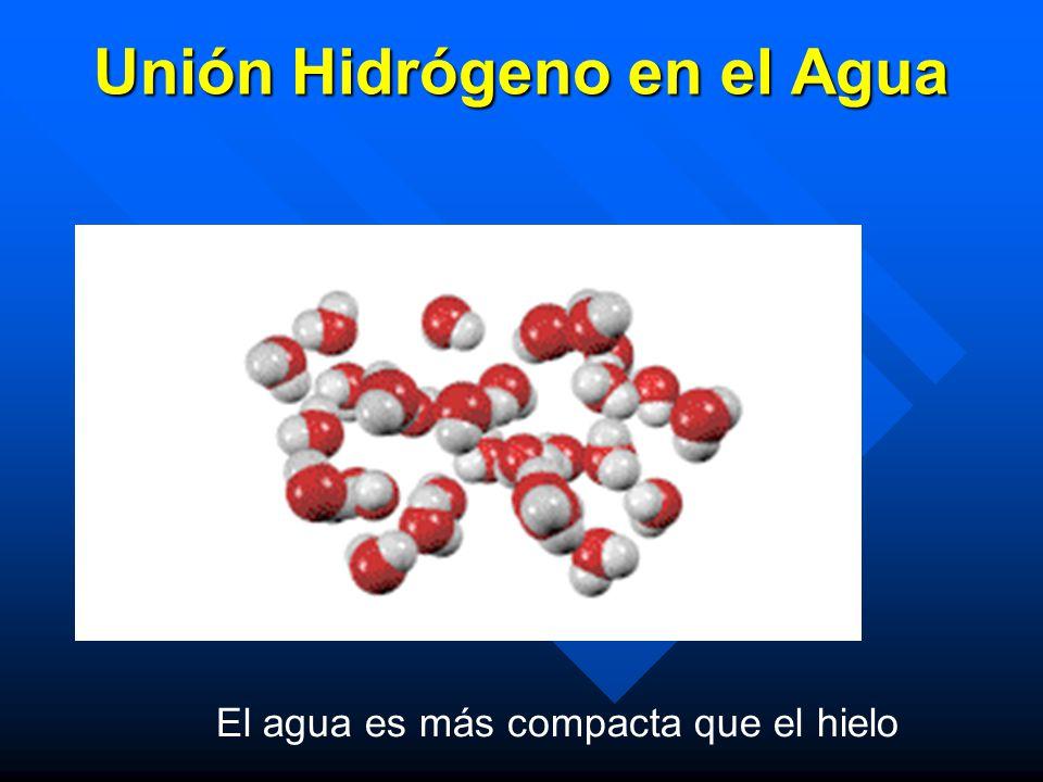 Unión Hidrógeno en el Agua El agua es más compacta que el hielo