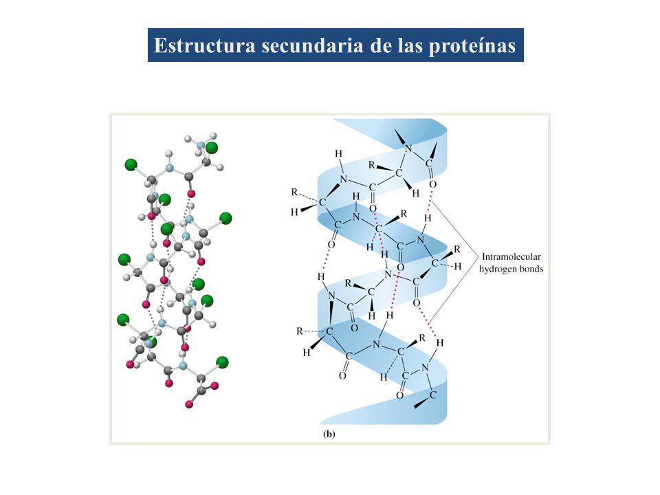 Estructura secundaria de las proteínas