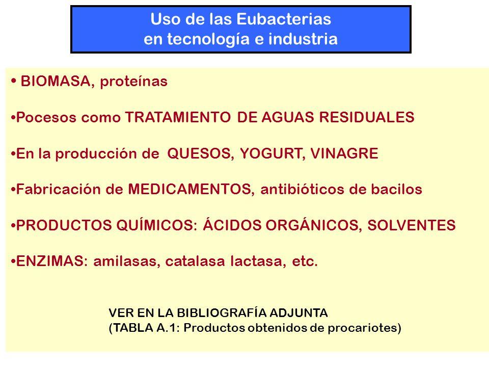 BIOMASA, proteínas Pocesos como TRATAMIENTO DE AGUAS RESIDUALES En la producción de QUESOS, YOGURT, VINAGRE Fabricación de MEDICAMENTOS, antibióticos de bacilos PRODUCTOS QUÍMICOS: ÁCIDOS ORGÁNICOS, SOLVENTES ENZIMAS: amilasas, catalasa lactasa, etc.