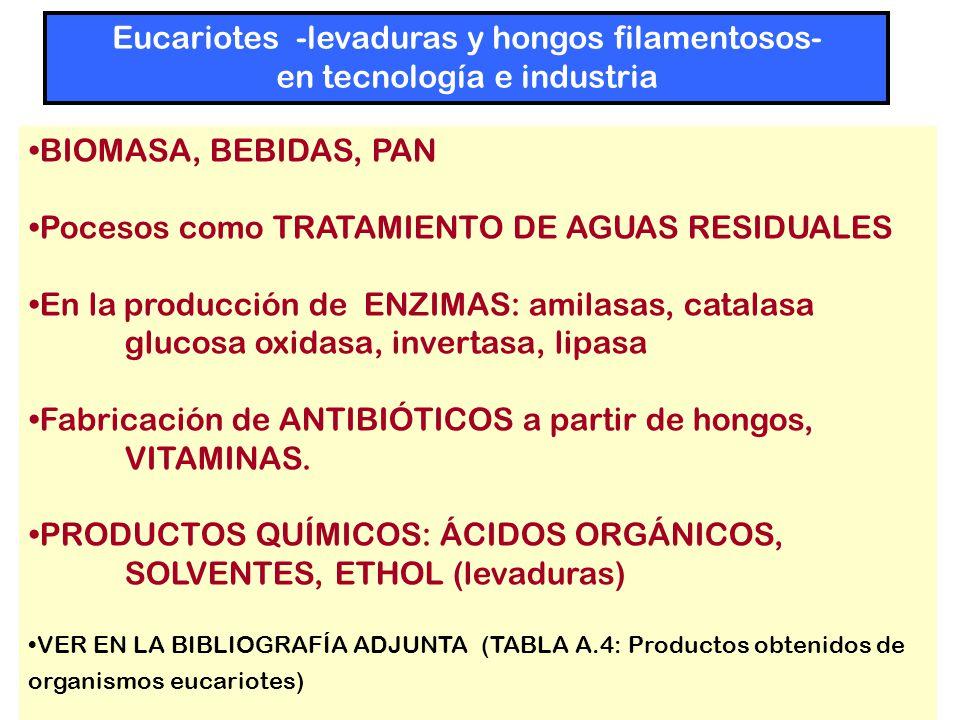 BIOMASA, BEBIDAS, PAN Pocesos como TRATAMIENTO DE AGUAS RESIDUALES En la producción de ENZIMAS: amilasas, catalasa glucosa oxidasa, invertasa, lipasa Fabricación de ANTIBIÓTICOS a partir de hongos, VITAMINAS.