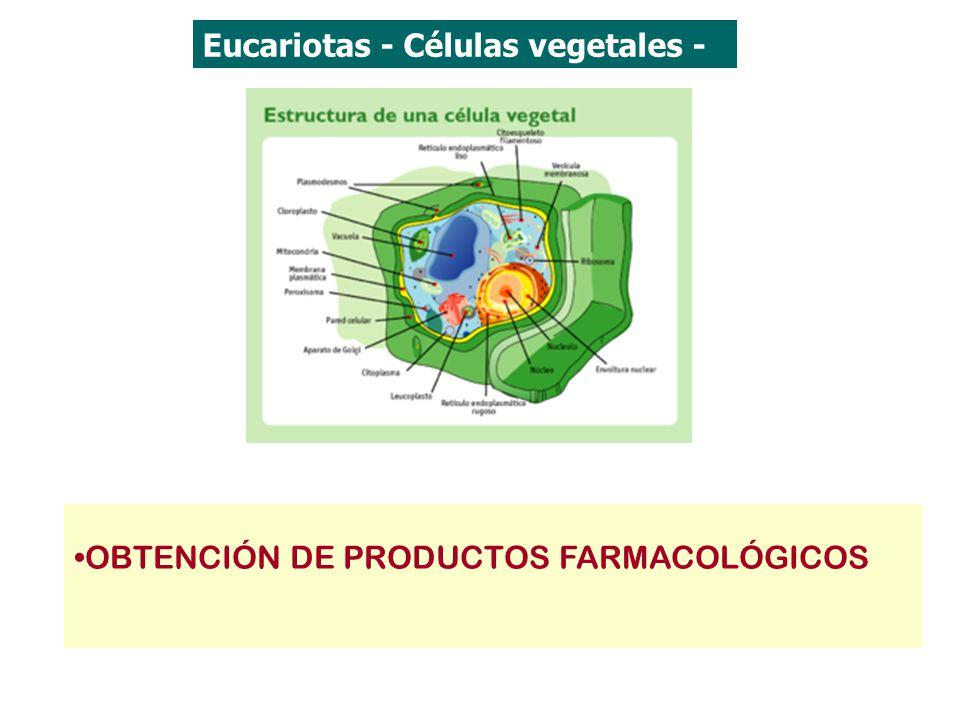 Eucariotas - Células vegetales - OBTENCIÓN DE PRODUCTOS FARMACOLÓGICOS