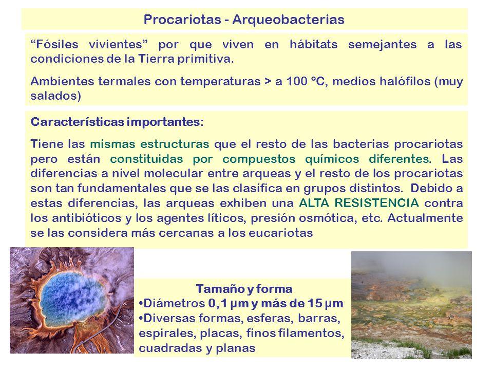 Procariotas - Arqueobacterias Características importantes: Tiene las mismas estructuras que el resto de las bacterias procariotas pero están constituidas por compuestos químicos diferentes.