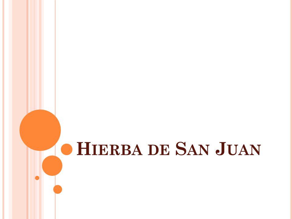 H IERBA DE S AN J UAN