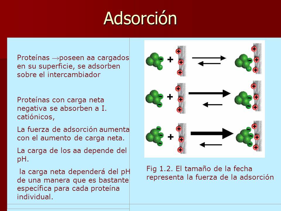 Adsorción Fig 1.2. El tamaño de la fecha representa la fuerza de la adsorción Proteínas poseen aa cargados en su superficie, se adsorben sobre el inte