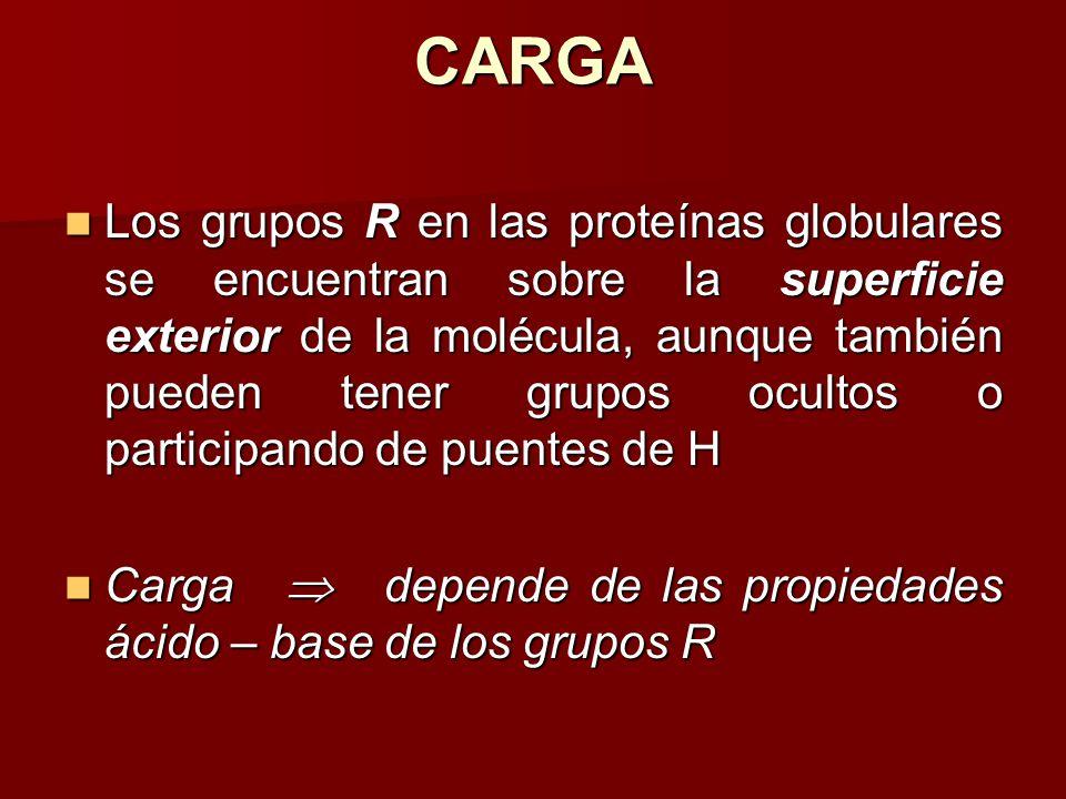 CARGA Los grupos R en las proteínas globulares se encuentran sobre la superficie exterior de la molécula, aunque también pueden tener grupos ocultos o