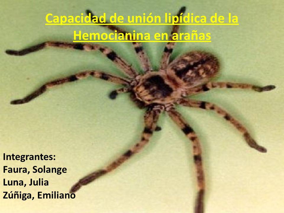 Capacidad de unión lipídica de la Hemocianina en arañas Integrantes: Faura, Solange Luna, Julia Zúñiga, Emiliano