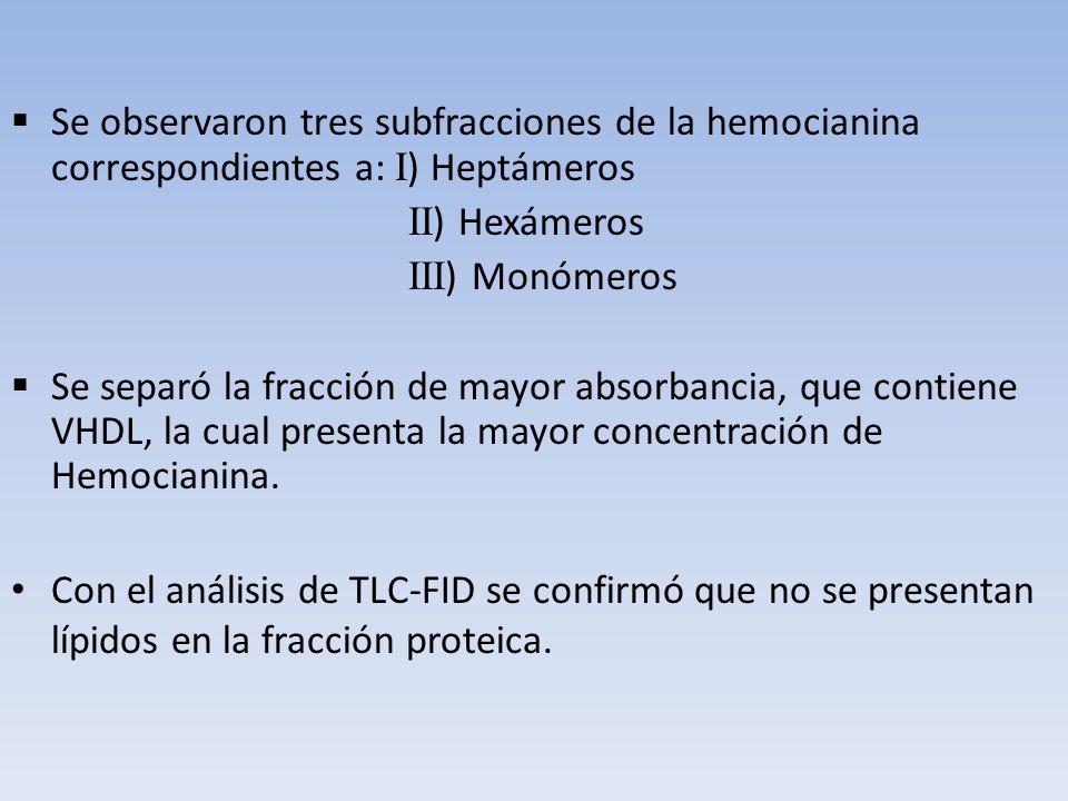 Se observaron tres subfracciones de la hemocianina correspondientes a: I ) Heptámeros II ) Hexámeros III ) Monómeros Se separó la fracción de mayor ab