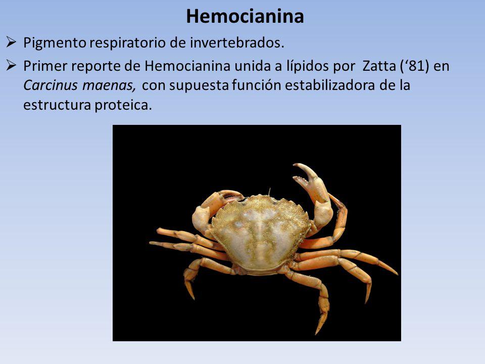 Hemocianina Pigmento respiratorio de invertebrados. Primer reporte de Hemocianina unida a lípidos por Zatta (81) en Carcinus maenas, con supuesta func