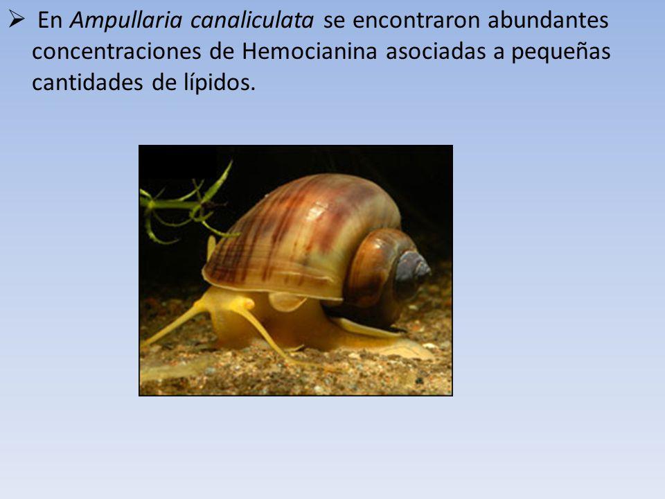 En Ampullaria canaliculata se encontraron abundantes concentraciones de Hemocianina asociadas a pequeñas cantidades de lípidos.