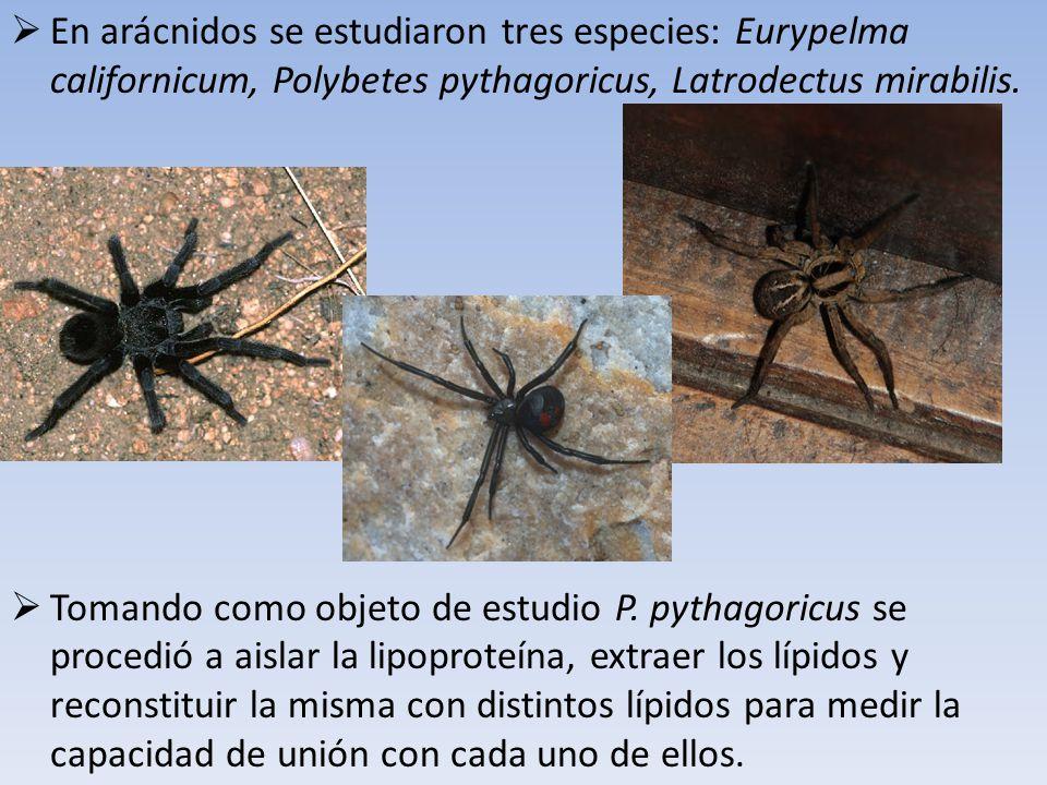 En arácnidos se estudiaron tres especies: Eurypelma californicum, Polybetes pythagoricus, Latrodectus mirabilis. Tomando como objeto de estudio P. pyt