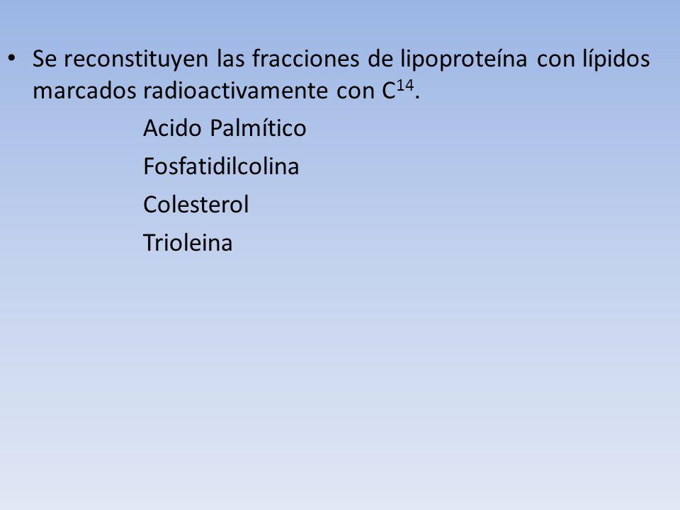 Se reconstituyen las fracciones de lipoproteína con lípidos marcados radioactivamente con C 14. Acido Palmítico Fosfatidilcolina Colesterol Trioleina