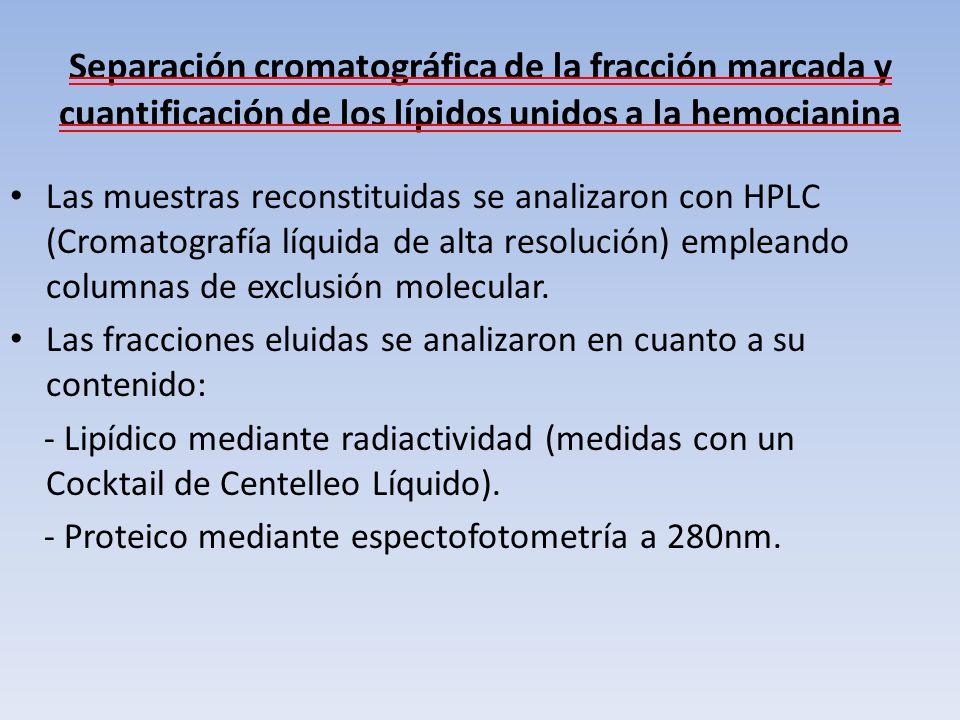 Separación cromatográfica de la fracción marcada y cuantificación de los lípidos unidos a la hemocianina Las muestras reconstituidas se analizaron con
