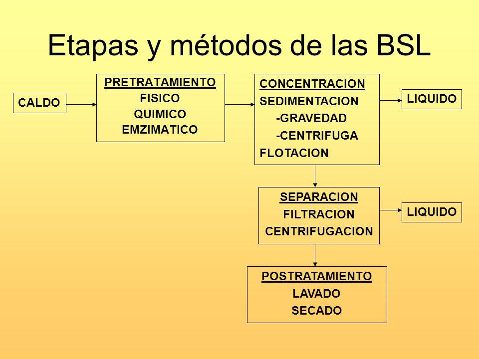 Etapas y métodos de las BSL PRETRATAMIENTO FISICO QUIMICO EMZIMATICO CONCENTRACION SEDIMENTACION -GRAVEDAD -CENTRIFUGA FLOTACION SEPARACION FILTRACION CENTRIFUGACION POSTRATAMIENTO LAVADO SECADO CALDO LIQUIDO