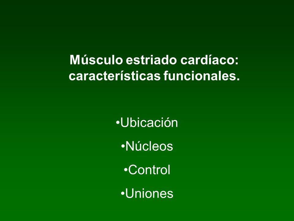 Músculo estriado cardíaco: características funcionales. Ubicación Núcleos Control Uniones