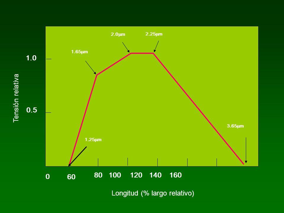 0 60 80 100 120 140 160 0.5 1.0 1.25 m 1.65 m 2.0 m 2.25 m 3.65 m Longitud (% largo relativo) Tensión relativa