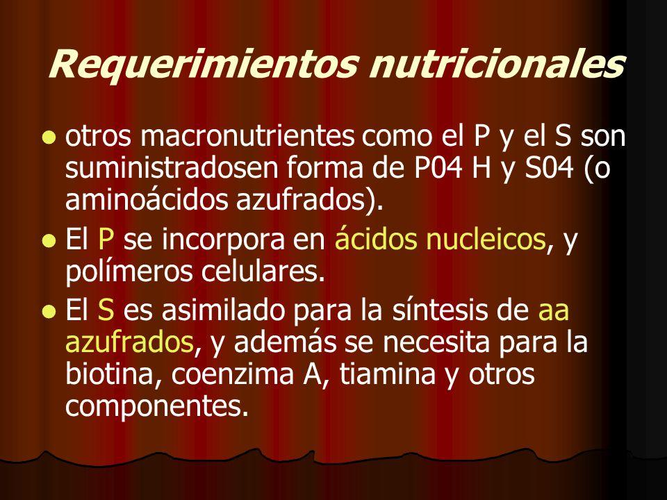 Requerimientos nutricionales otros macronutrientes como el P y el S son suministradosen forma de P04 H y S04 (o aminoácidos azufrados).