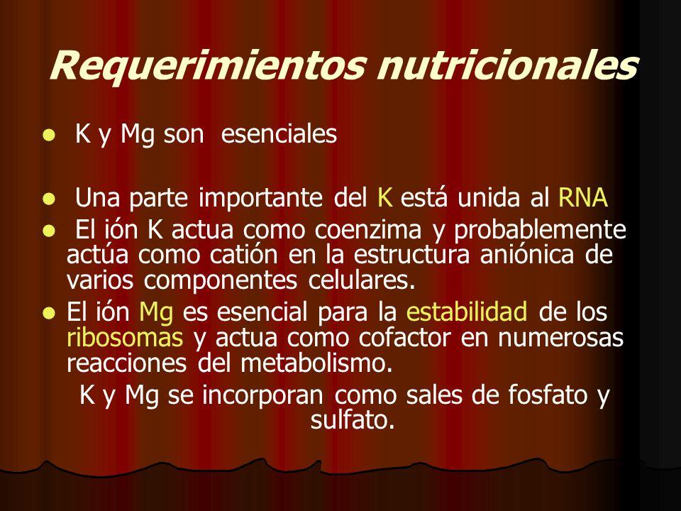 Requerimientos nutricionales K y Mg son esenciales Una parte importante del K está unida al RNA El ión K actua como coenzima y probablemente actúa como catión en la estructura aniónica de varios componentes celulares.