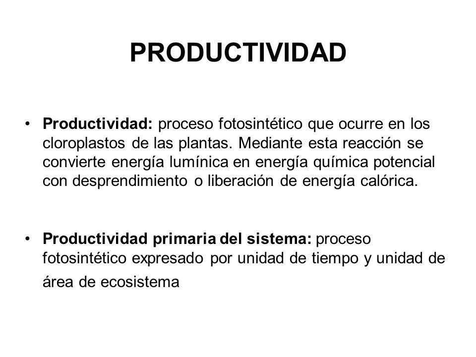 PRODUCTIVIDAD Productividad: proceso fotosintético que ocurre en los cloroplastos de las plantas. Mediante esta reacción se convierte energía lumínica