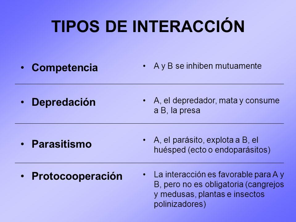 TIPOS DE INTERACCIÓN Competencia A y B se inhiben mutuamente Depredación Parasitismo Protocooperación A, el depredador, mata y consume a B, la presa A