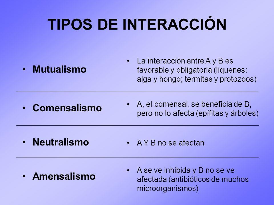 TIPOS DE INTERACCIÓN Mutualismo La interacción entre A y B es favorable y obligatoria (líquenes: alga y hongo; termitas y protozoos) Comensalismo Neut